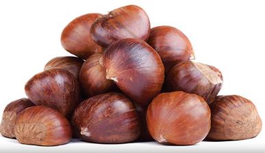 chestnut-web