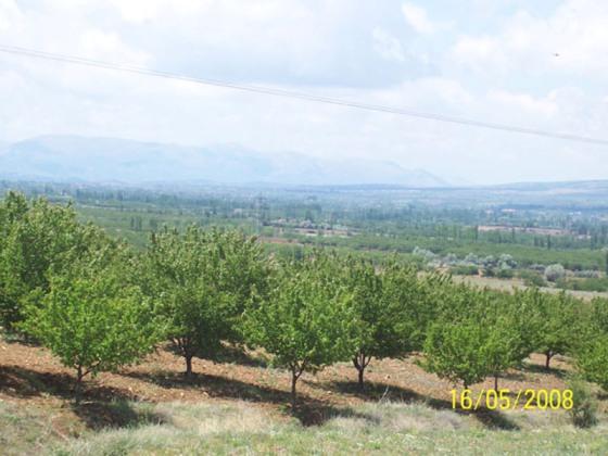 organic apricot farms