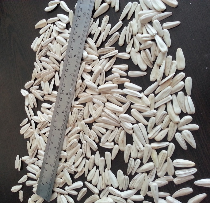 sunflower seeds inshell WHITE