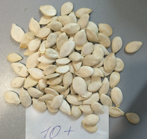 volga Gray type Pumpkin seeds 10mm