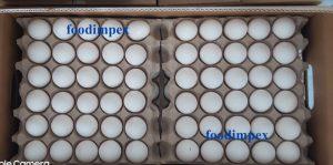 henn eggs, chicken poultry eggs